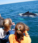 See Whales Close Up