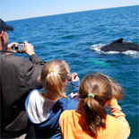 Whale Sightings Are Guaranteed On This Family Friendly Tour