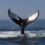 New England Aquarium Whale Watch Tour