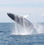 Discount Boston Whale Watching Tickets