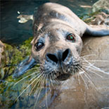 An outdoor seal exhibit located on the Aquarium Plaza, that's a favorite of both tourists and local residents