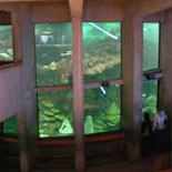 The Giant Ocean Tank encircled by 3 levels of fun!