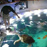 Feeding the turtle at the top of the Giant Ocean Tank
