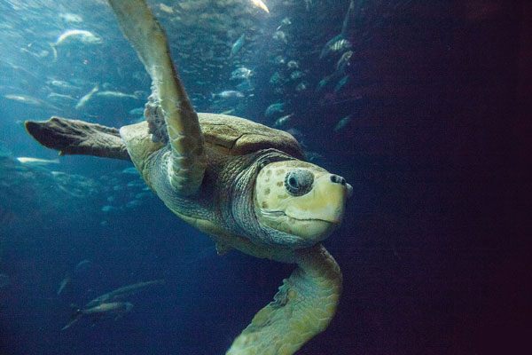 Conservation efforts with Sea Turtles