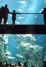 South Carolina Aquarium Discount Tickets