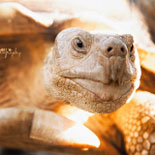 Stroll through our exhibit areas featuring over 100 reptiles and mammals that have been adopted and rescued