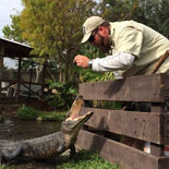 Take a walk on the wild side back in time with an original dinosaur, the Florida Alligator