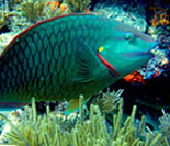 More Than 300 Species of Fish to Gaze Upon in the Underwater World of Key West
