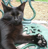 See The Descendants Of Hemingway's 6 Toed Cats