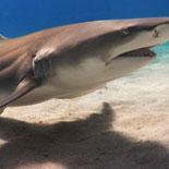 Daring guests can even pet a live shark!