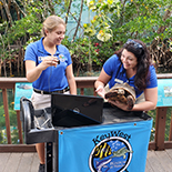 The Key West Aquarium is pleased to offer Virtual Tours of its facility for schools and groups.