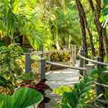 Enjoy the Gardens and see a mix of native and exotic plants, including bromeliads and orchids