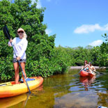 A hands-on experience with  professional instruction allows you to explore lush mangroves