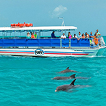 Observe the Grace and Beauty of our Resident Key West Dolphins