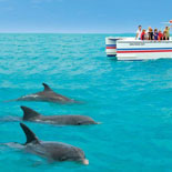 All Aboard the Fury Catamaran for the Dolphin Watch and Snorkel Combo