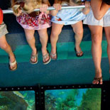 Underwater Vistas