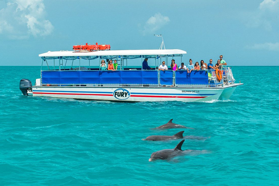 Observe the beauty of our Key West Dolphins