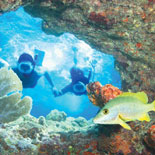 Pristine coral reefs and tropical species unique to the area