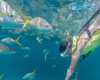 Key West Snorkel and Sailing Adventure
