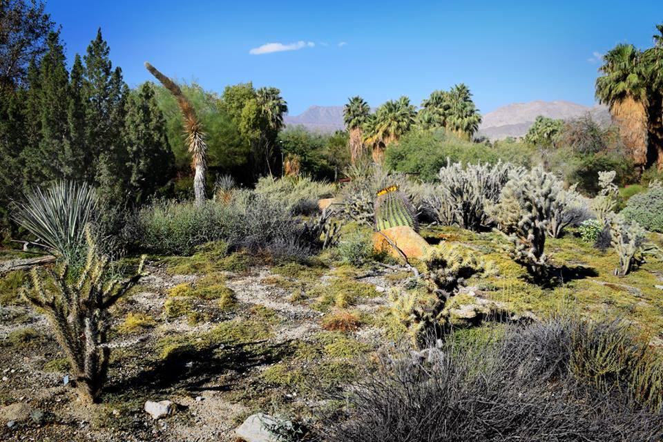 Living Desert Gardens (Khu vườn sa mạc sống)
