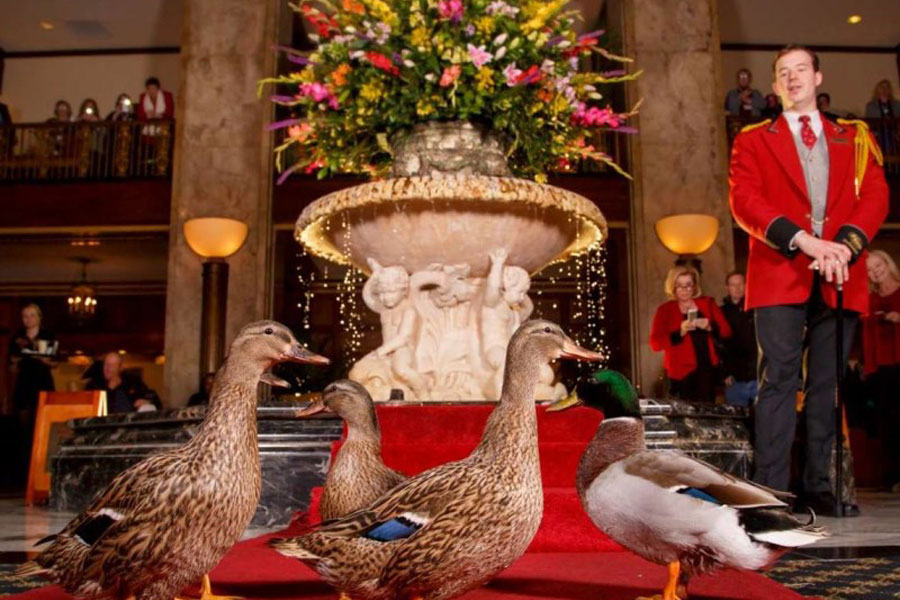 Peabody Duck March