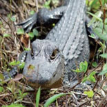 The Everglades Tour
