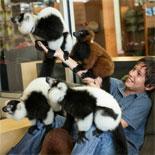 Have A Lemur Encounter