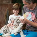 See A White Tiger