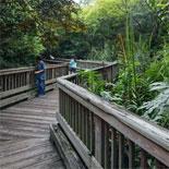 Make Your Way Across A True Replica Of The Florida Everglades