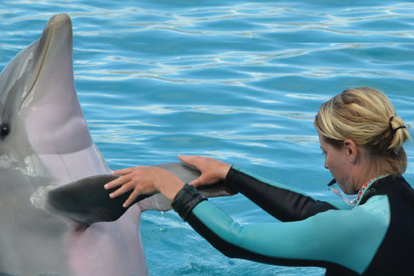 Interact with Dolphins
