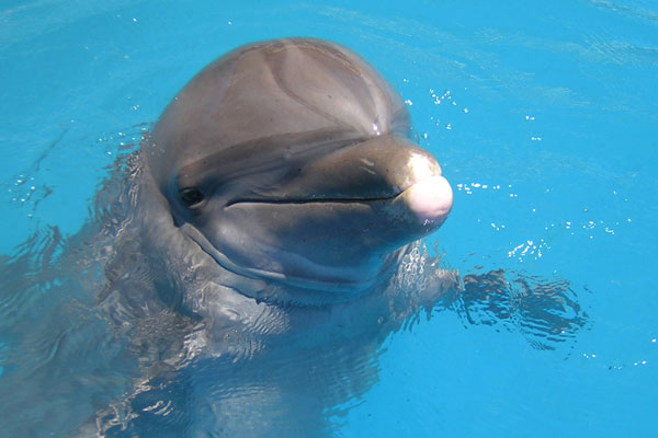 Learn about Dolphin Behavior