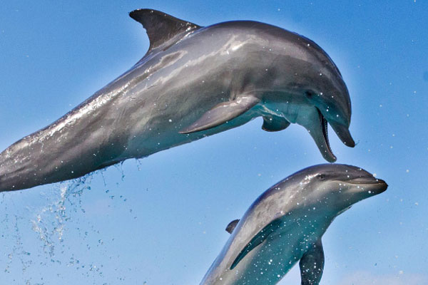 Insightful glance at dolphin behavior up-close