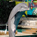 The Flipper Dolphin Show