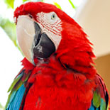 Parrots and Other Exotic Animals Abound