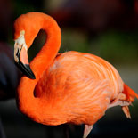Zoo Miami Best Value Package