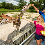 Guests will be able to feed giraffes, parrots, rhino or a camel.