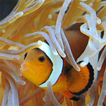 Audubon Nature Institute - Audubon Aquarium of the Americas