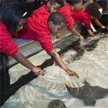 Stingray Touch Tank