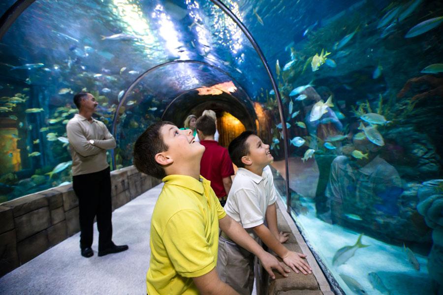 New orleans aquarium coupons