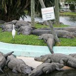 Get up-close and personal with gators, crocs, birds, turtles, zebu, deer and much more!