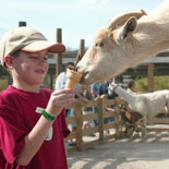 Feed the lovable animals at the petting zoo and the aviary.