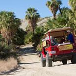 Explore a Natural Palm Oasis
