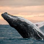 Whale Watching (Winter/Summer)
