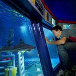 Deep Sea Adventure submarine ride