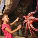 Get hands-on at SEA LIFE® Aquarium