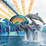 Dolphin Days inspires guests