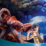 Dive in to Ocean Explorer™