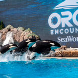 Experience a new way to connect with the ocean's most powerful predator at Orca Encounter™