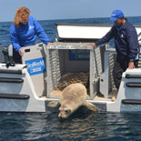Global leader in marine animal care and welfare, education, conservation, research and rescue