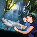 Aquarium By The Bay